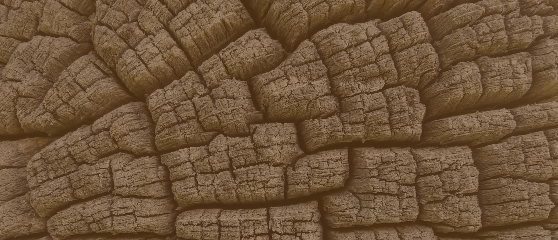 Dendroarchaeologie-Slider-5